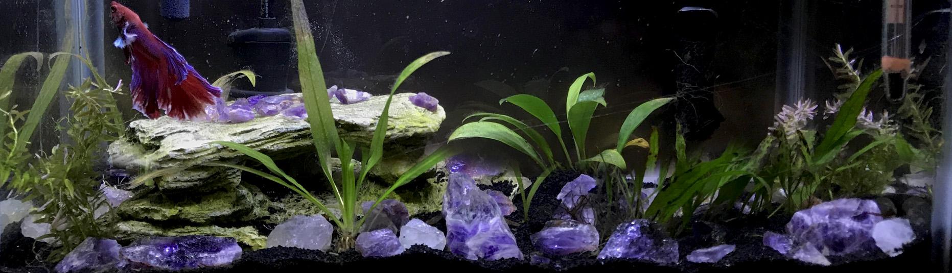 purple-beta-stones-tank